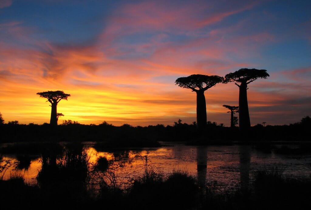 coucher-soleil-baobas-madagascar