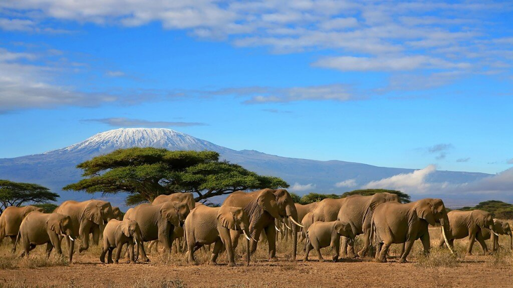 elephants-kenya