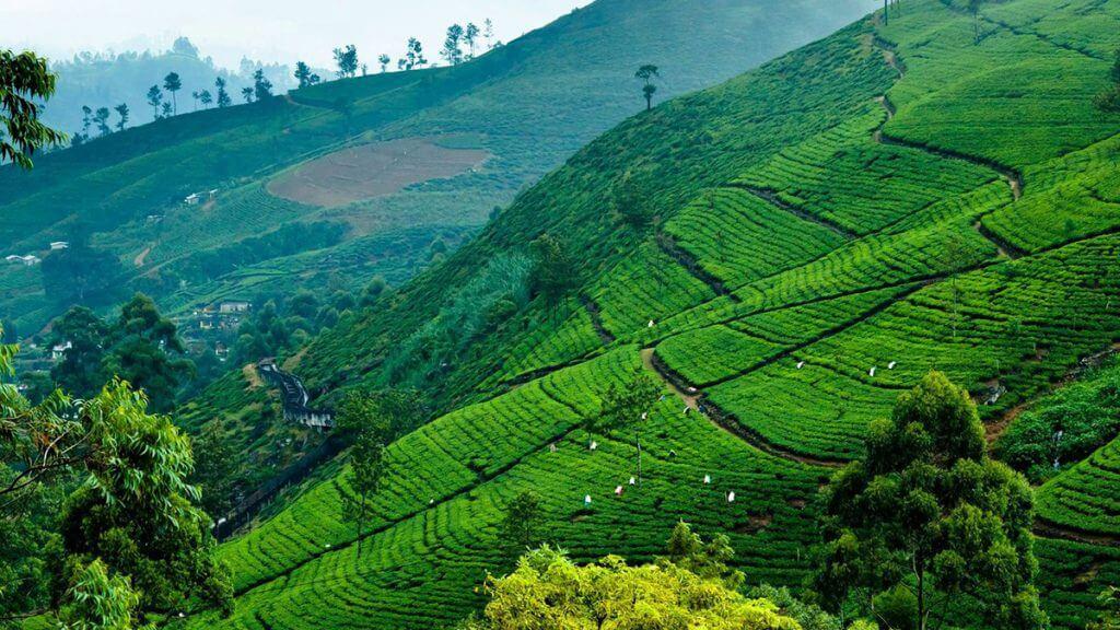 plantation-the-sri-lanka